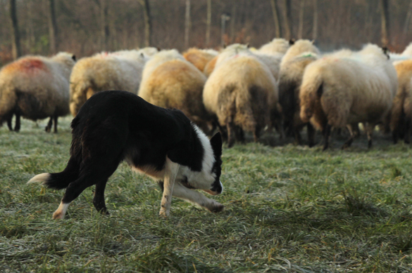 Landgoedboerderij Oosterheerdt - Team en bedrijfsuitjes